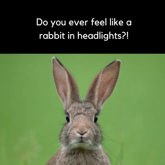 A rabbit in headlights idiom